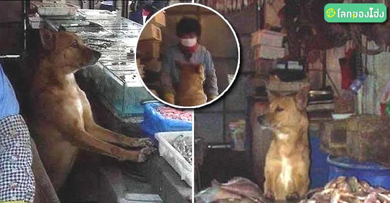 Dogilike.com :: น้องหมาจรจัดแสนรู้ เฝ้าแผงขายปลา ตอบแทนแม่ค้าช่วยชีวิต ..