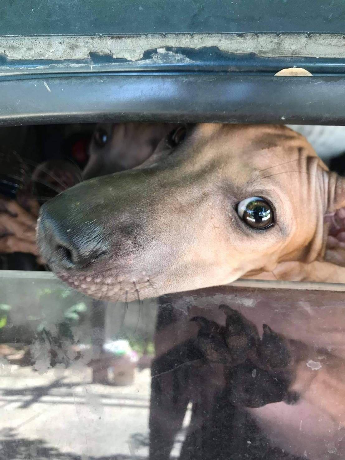 Dogilike.com :: น้องหมาถูกขังตากแดด ส่งสายตาอ้อนวอน ชาวบ้านรีบเข้าช่วย ..