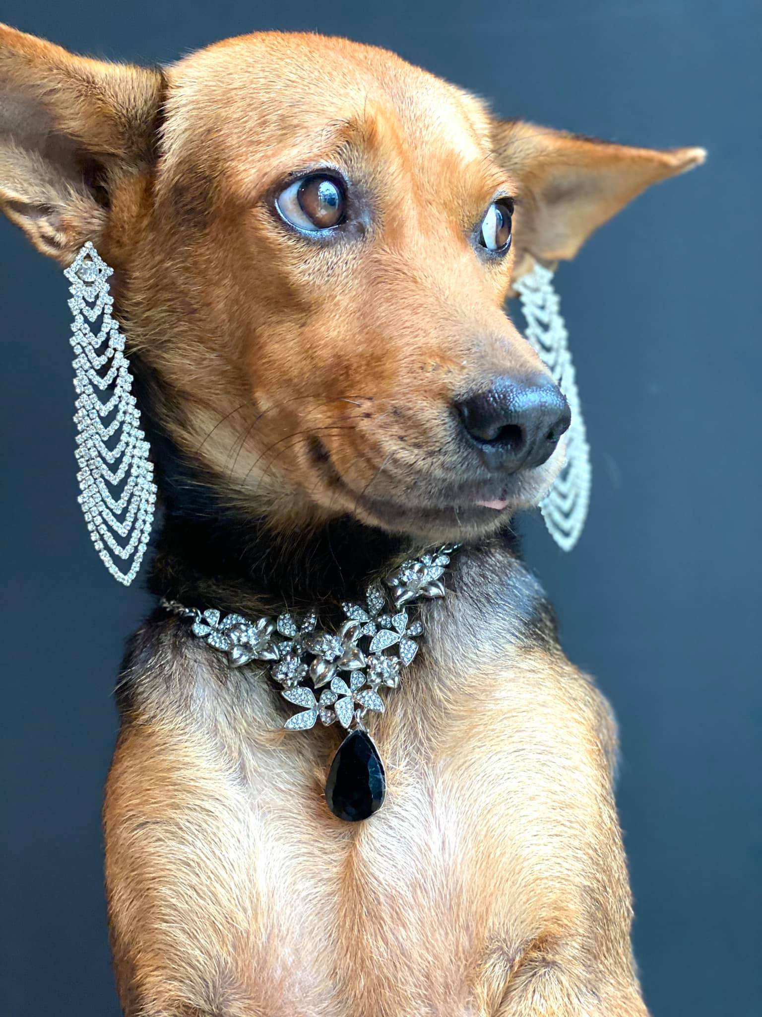 Dogilike.com :: อัปเดตชีวิตเจ้า หมูทะ หลังได้เจ้าของใหม่ ชีวิตสุดปัง