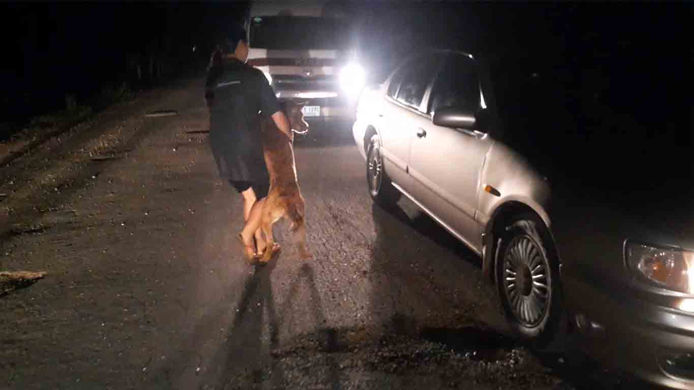 Dogilike.com :: ครูสาวแจ้งจับเพื่อนบ้าน !! หลังพบทำร้ายน้องหมาปางตาย