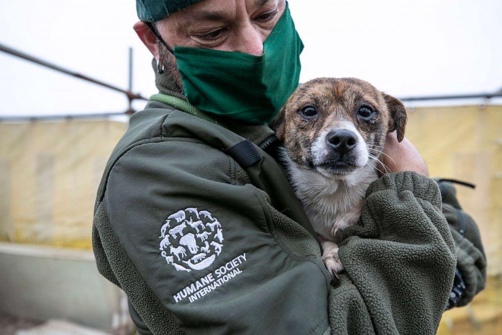 Dogilike.com :: ช่วยน้องหมาเกือบ 200 ชีวิต จากฟาร์มค้าเนื้อสุนัขในเกาหลี ..