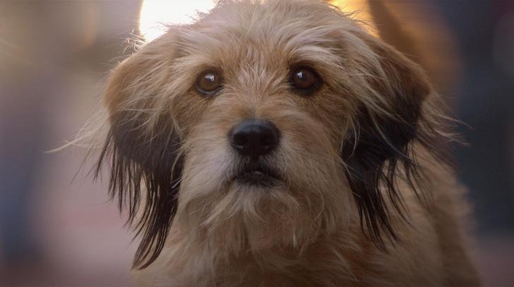 Dogilike.com ::  BenJi  ภาพยนต์ feel good ที่ครองใจคนรักหมามาหลายยุค ..
