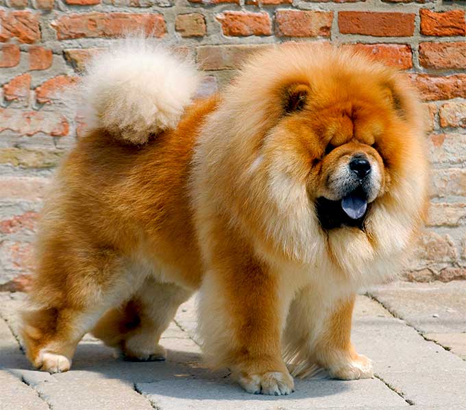 Dogilike.com :: จัดอันดับ 5 น้องหมารักสงบ ไม่ชอบทะเลาะกับใคร