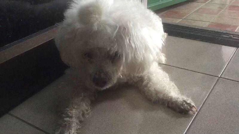 Dogilike.com :: น้องหมานอนเฝ้าเจ้านายแสนรัก นอนเสียชีวิตภายในบ้าน ..
