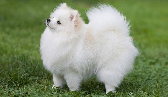 Dogilike.com :: จัดอันดับ 5 สายพันธุ์น้องหมาสุดฮิต ที่คนไทยนิยมเลี้ยง