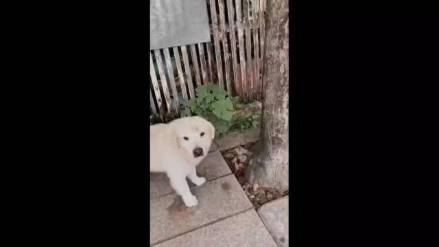 Dogilike.com :: เจ้าของหมาเข้าแจ้งความ หลังถูกตุ๊กตุ๊กอุ้มน้องหมาไป ..