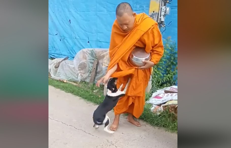 Dogilike.com :: เจ้าหมาวัดได้บ้านใหม่ แต่ไม่ลืมหลวงตาที่ให้ข้าวให้น้ำ ..