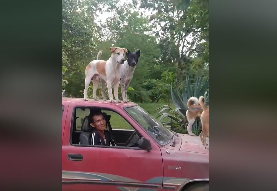 Dogilike.com :: แก๊งน้องหมาสุดจ๊าบ ขึ้นรถไปพร้อมเจ้าของ ..