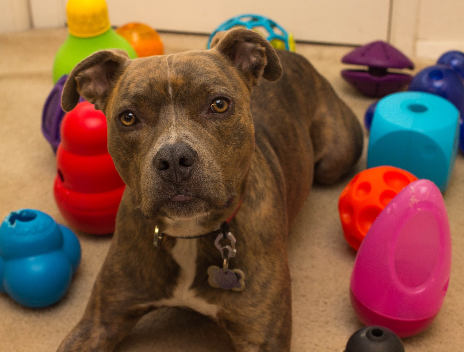 Dogilike.com :: เลี้ยงน้องหมาตัวแรก ต้องเตรียมตัวยังไง ไปดูกัน !!