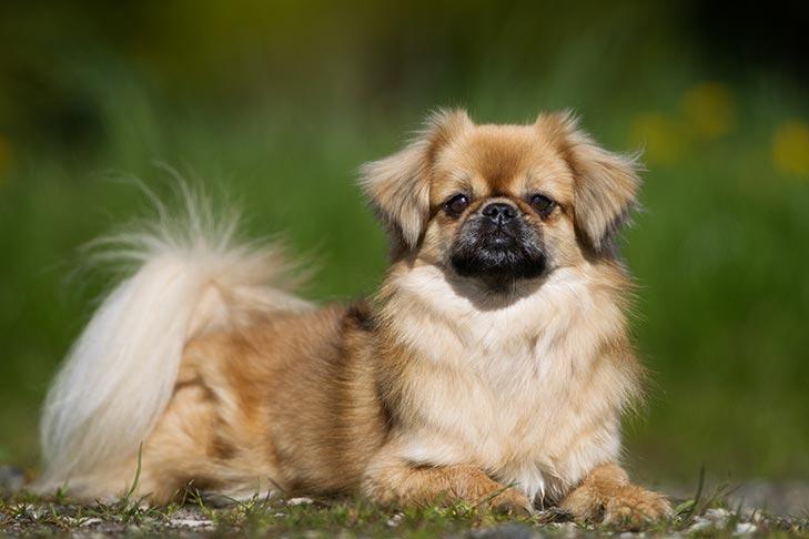 Dogilike.com :: จัดอันดับ 5 สายพันธุ์น้องหมาขาสั้น น่ารักตะมุตะมิ