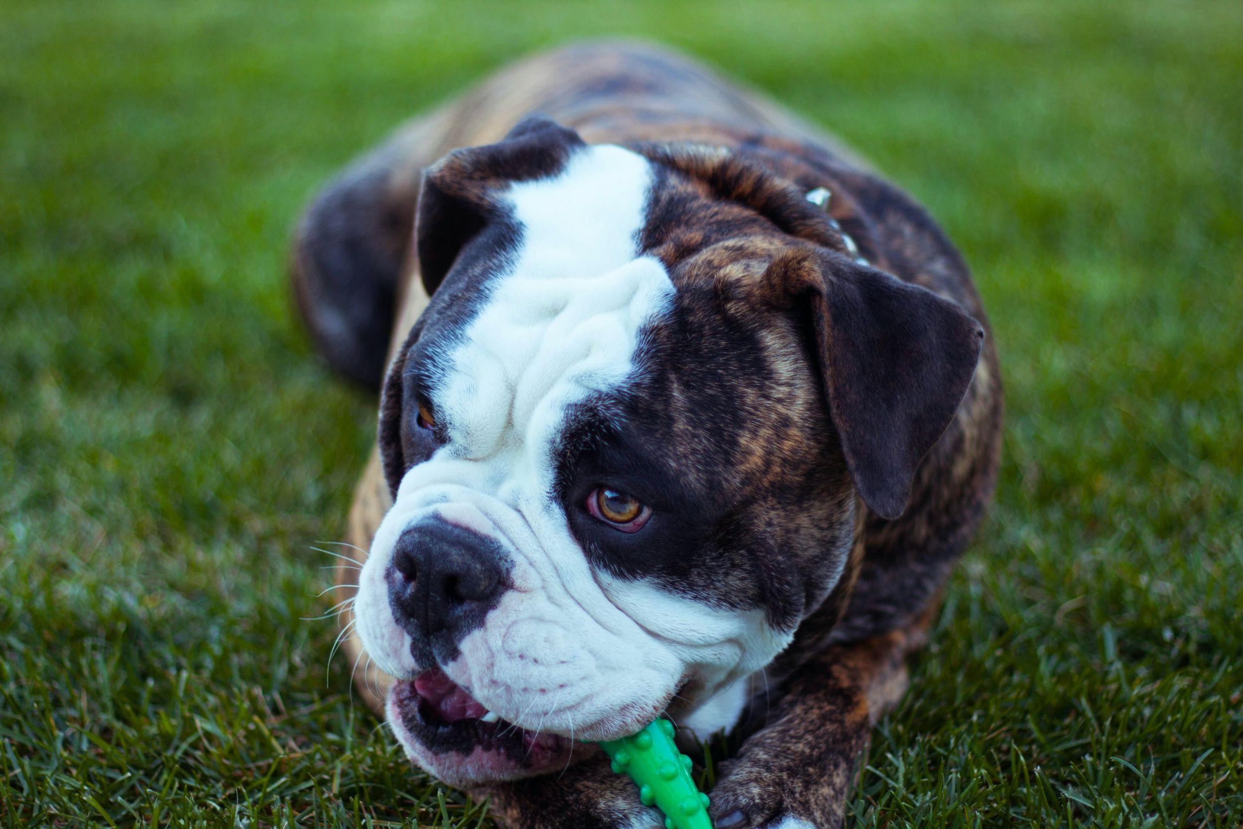 Dogilike.com :: คู่มือจัดการ 5 พฤติกรรมชวนปวดหัวของน้องหมา พร้อมวิธีแก้ !!