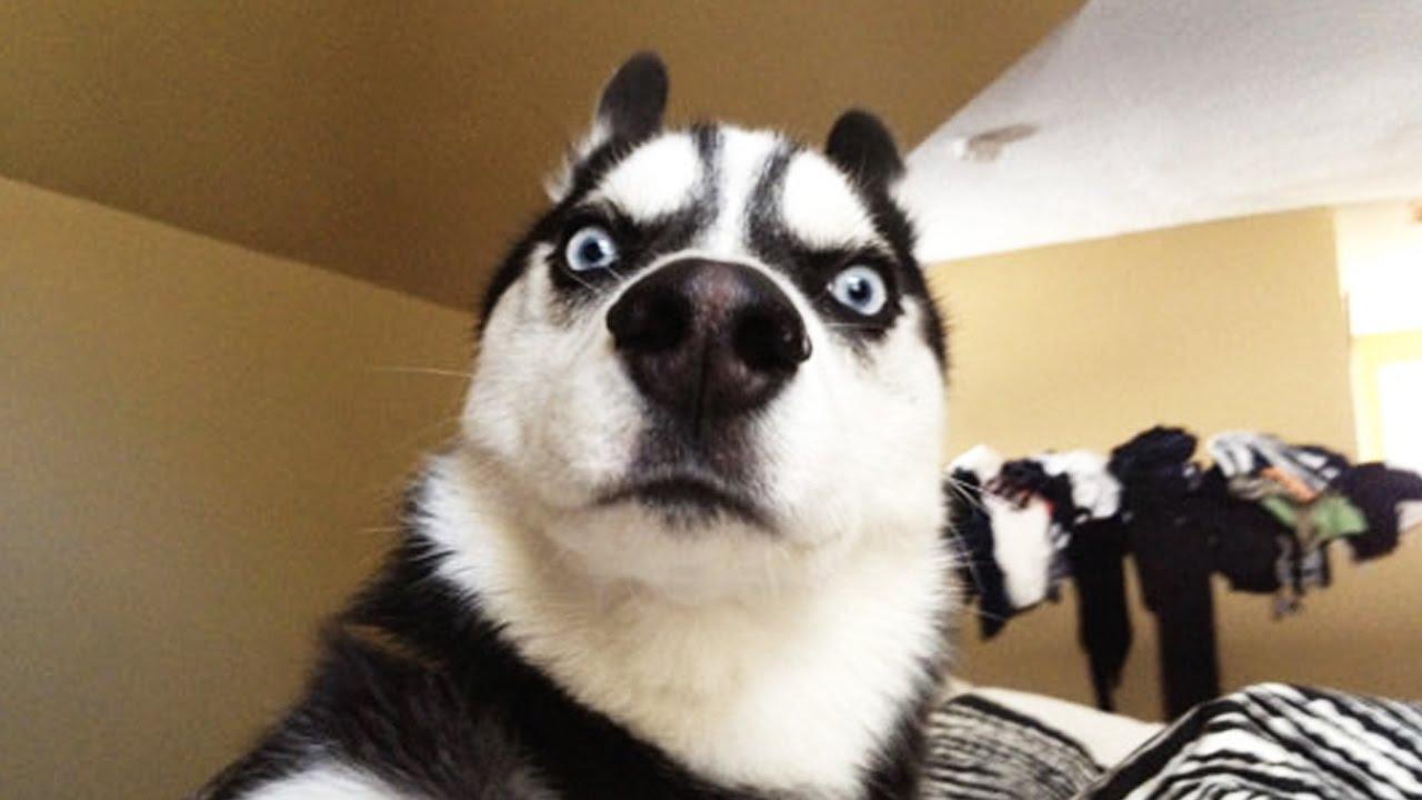 Dogilike.com :: จัดอันดับ 5 น้องหมาสายฮา ที่แค่เห็นหน้าก็ยิ้มออก