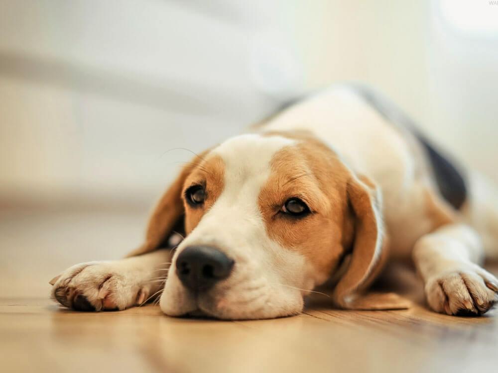 Dogilike.com :: 5 สาเหตุขนร่วงของน้องหมาที่พบบ่อย พร้อมวิธีแก้