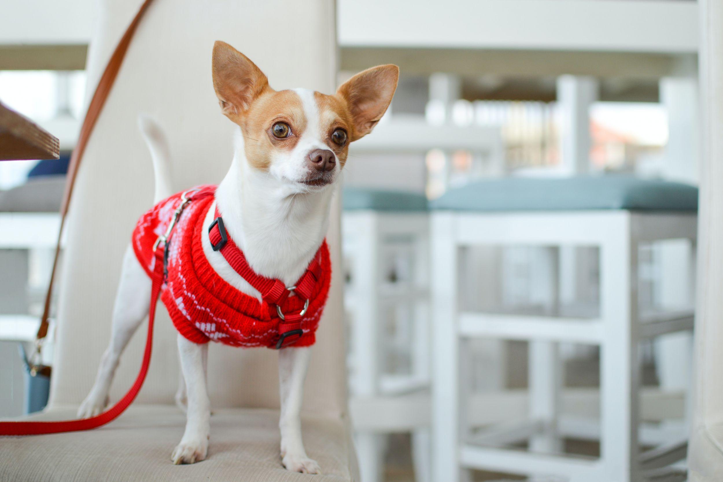 Dogilike.com :: จัดอันดับ 5 น้องหมาติดเจ้าของ เลี้ยงไว้ไม่มีคำว่าเหงา