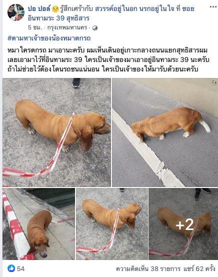 Dogilike.com :: หนุ่มรีบประกาศหาบ้าน หวั่นเจ้าของตามหาน้องหมาตกรถ