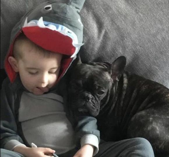 Dogilike.com :: ฮือฮา! สุนัขพันธุ์เฟรนช์ บูลด็อกตกลูกทีเดียว 13 ตัว