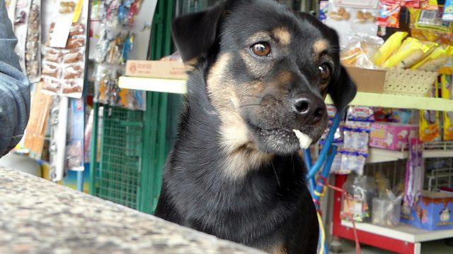 Dogilike.com :: สุนัขผู้ซื่อสัตย์นั่งรอเจ้านายอยู่หน้าห้องฉุกเฉินนานถึง 4 ชั่วโมง!