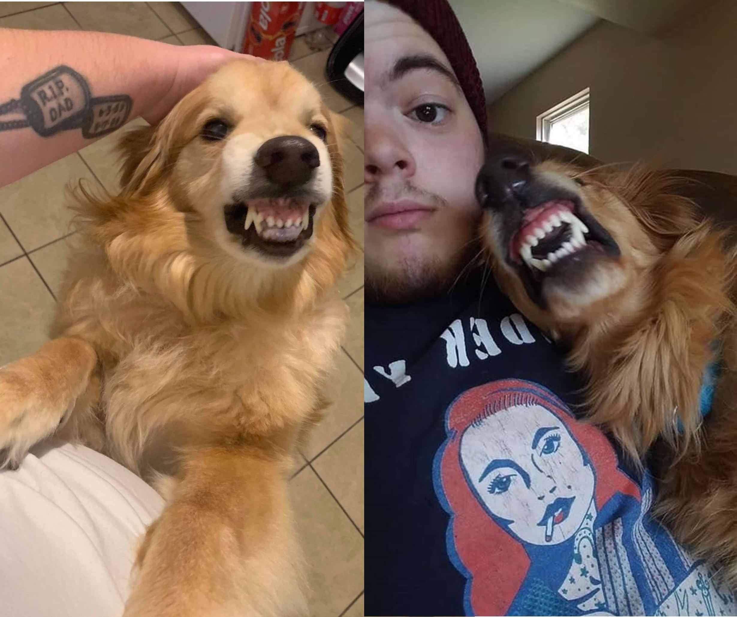 Dogilike.com :: เรื่องราวสุดน่ารัก! เจ้าโกลเด้นฯยิ้มหวานกับมิตรภาพในศูนย์พักพิงฯ