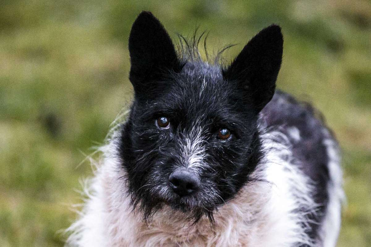 Dogilike.com :: เพราะความผูกพัน! ชาวเอสโนเนียร่วมใจสร้างรูปปั้นให้น้องหมาจรจัด