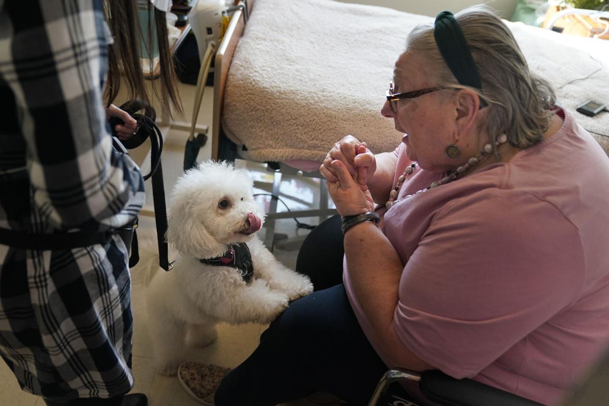 Dogilike.com :: น่ารัก! อังกฤษนำสุนัขไปช่วยคลายเครียดที่บ้านพักคนชรา