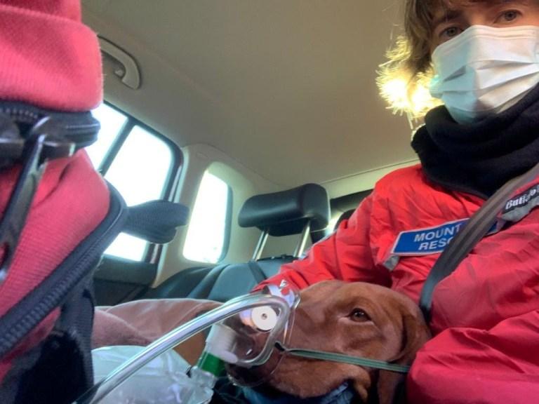 Dogilike.com :: รอดปฏิหาริย์! เจ้าตูบผลัดตกเขาสูง 150 ฟุต กู้ภัยเร่งช่วยชีวิต