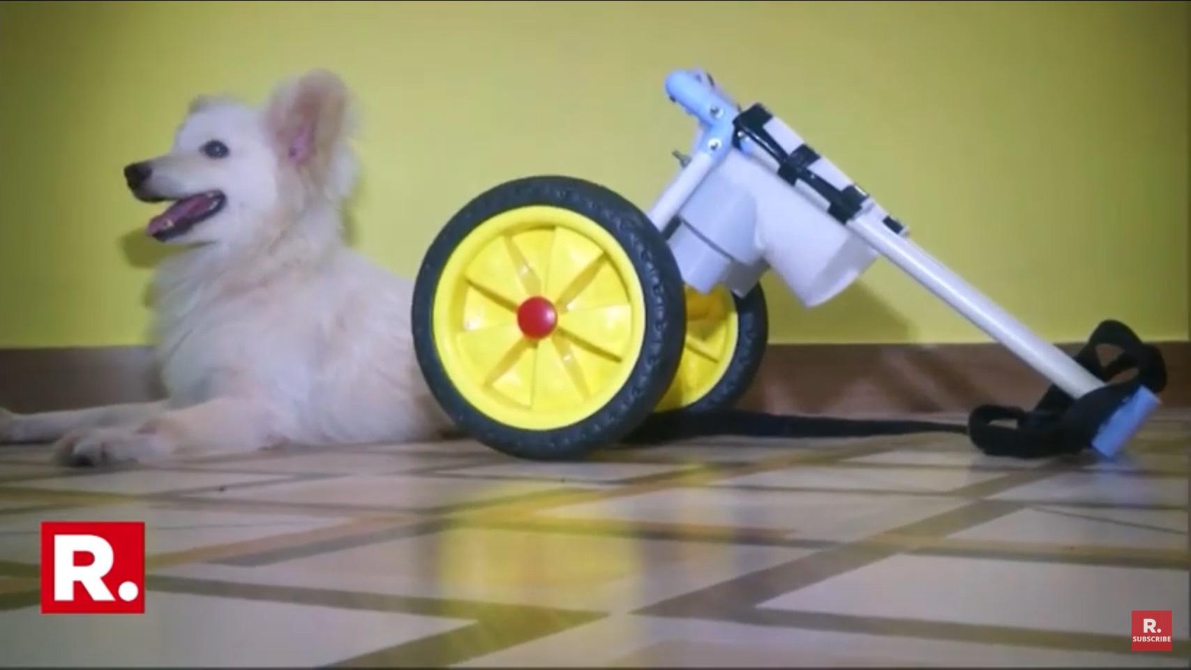 Dogilike.com :: โชคดีสุดๆ พ่อลูกใจบุญรับสุนัขพิการมาเลี้ยงพร้อมกับสร้างรถเข็นใหม่ให้