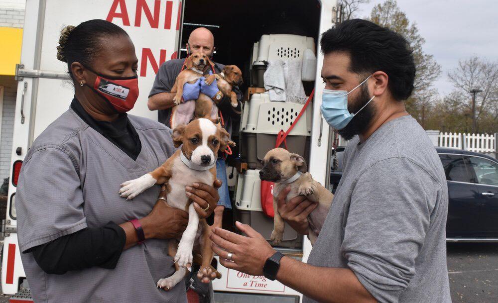 Dogilike.com :: ประทับใจ! มูลนิธิประเทศจอร์เจียทำท่อส่งลูกสุนัขสู่บ้านบุญธรรมหลังใหม่