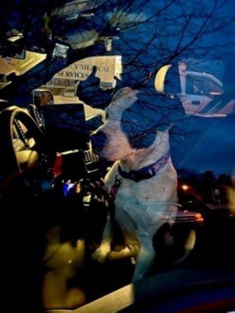 Dogilike.com :: เจ้าตูบฮีโร่! นำทางตำรวจไปช่วยชีวิตเจ้านายขับรถชนอยู่ในป่า