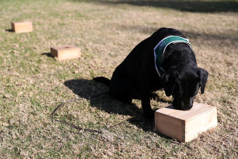 Dogilike.com :: สุนัขช่วยตรวจผู้ติดเชื้อโควิด-19 ที่สนามบินประเทศชิลี