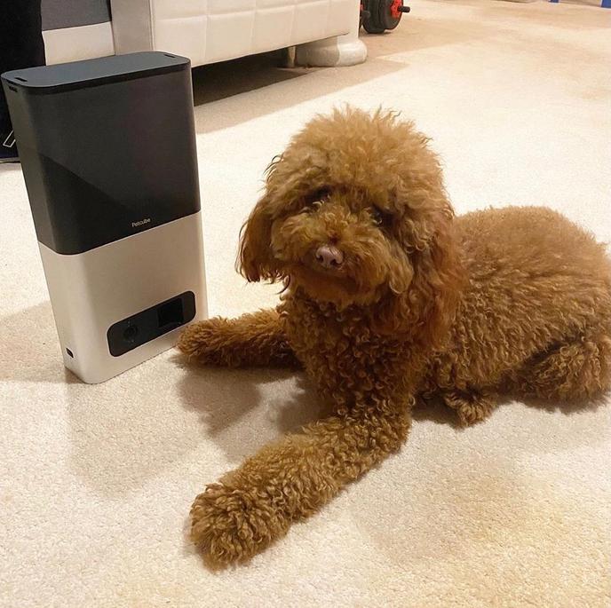 Dogilike.com :: จัดอันดับ 5 แกดเจ็ตสำหรับน้องหมากที่ดีที่สุดประจำปี 2021