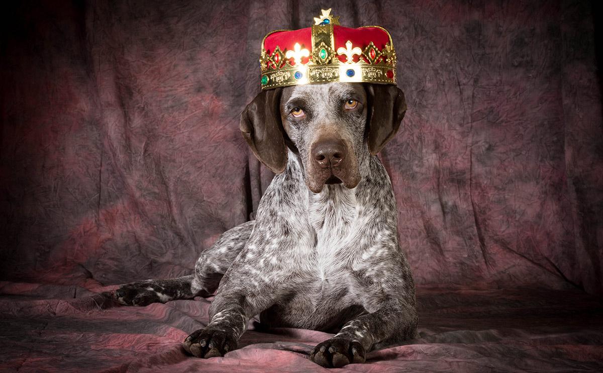 Dogilike.com :: เรื่องเล่าจากอดีต EP3 ... สุนัขราชาที่ถูกกล่าวถึงในประวัติศาสตร์นอร์ดิก