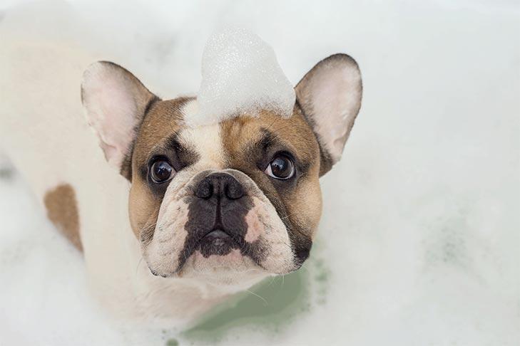 Dogilike.com :: เราสามารถใช้แชมพูสำหรับคนกับน้องหมาได้ไหมนะ?