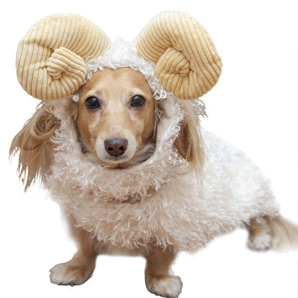 Dogilike.com :: มาเช็คกัน! ราศีเกิดกับนิสัยของน้องหมา