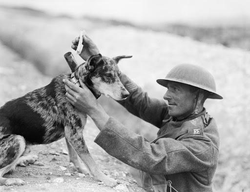 Dogilike.com :: เรื่องเล่าจากอดีต EP4...ประวัติการฝึกสุนัขสมัยสงครามโลก