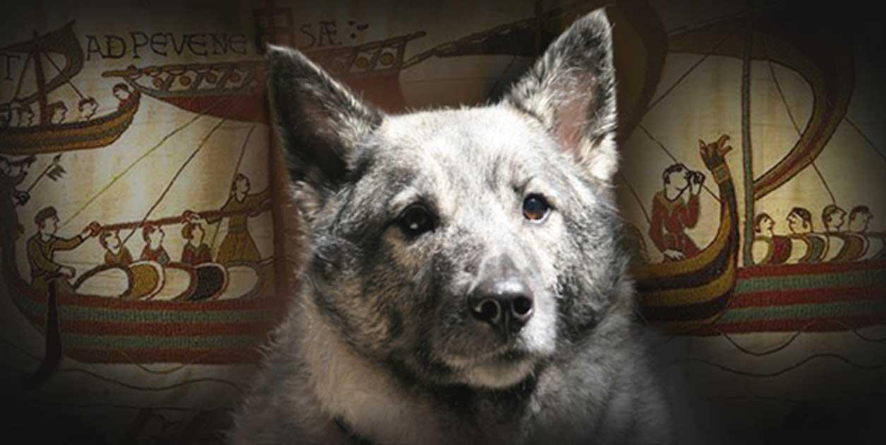 Dogilike.com :: เรื่องเล่าจากอดีต EP2 ... ตำนานชาวนอร์สกับสุนัขในยุคแห่งนักรบไวกิ้ง