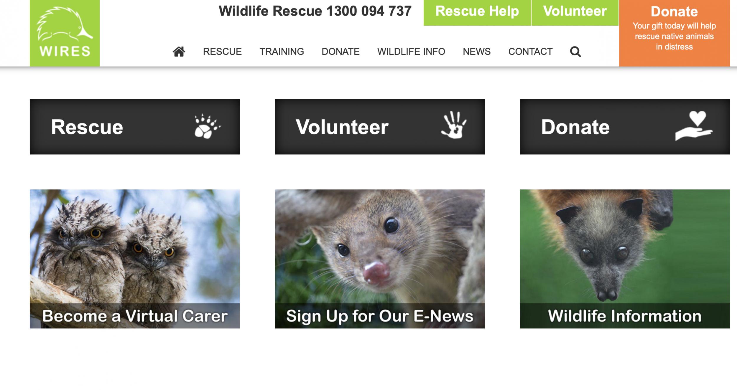 Dogilike.com :: ปลอดภัยไว้ก่อน! ตามดูการช่วยเหลือสัตว์เลี้ยงและสัตว์ป่าจากกรณีไฟไหม้ป่าที่ออสเตรเลีย