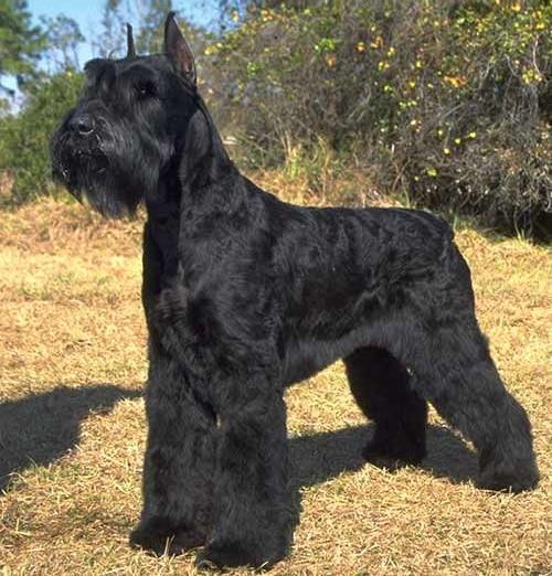 Dogilike.com :: จัดอันดับ 5 สายพันธุ์น้องหมาสุดยอดนักเฝ้าบ้าน