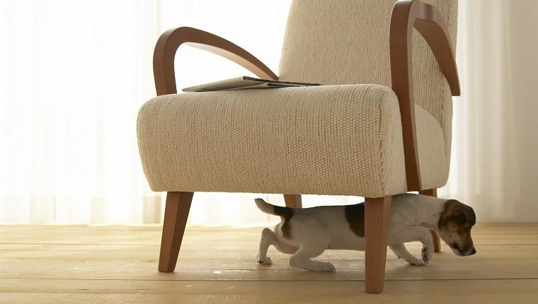 Dogilike.com :: 5 กิจกรรมแก้เบื่อให้น้องหมา เมื่อต้องอยู่แต่ในบ้านเป็นเวลานาน