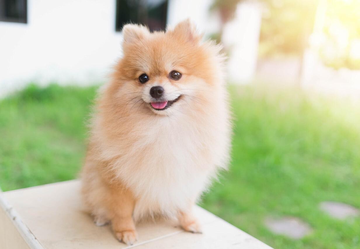 Dogilike.com :: จัดอันดับ 5 น้องหมาสายพันธุ์เล็กที่กินยาก