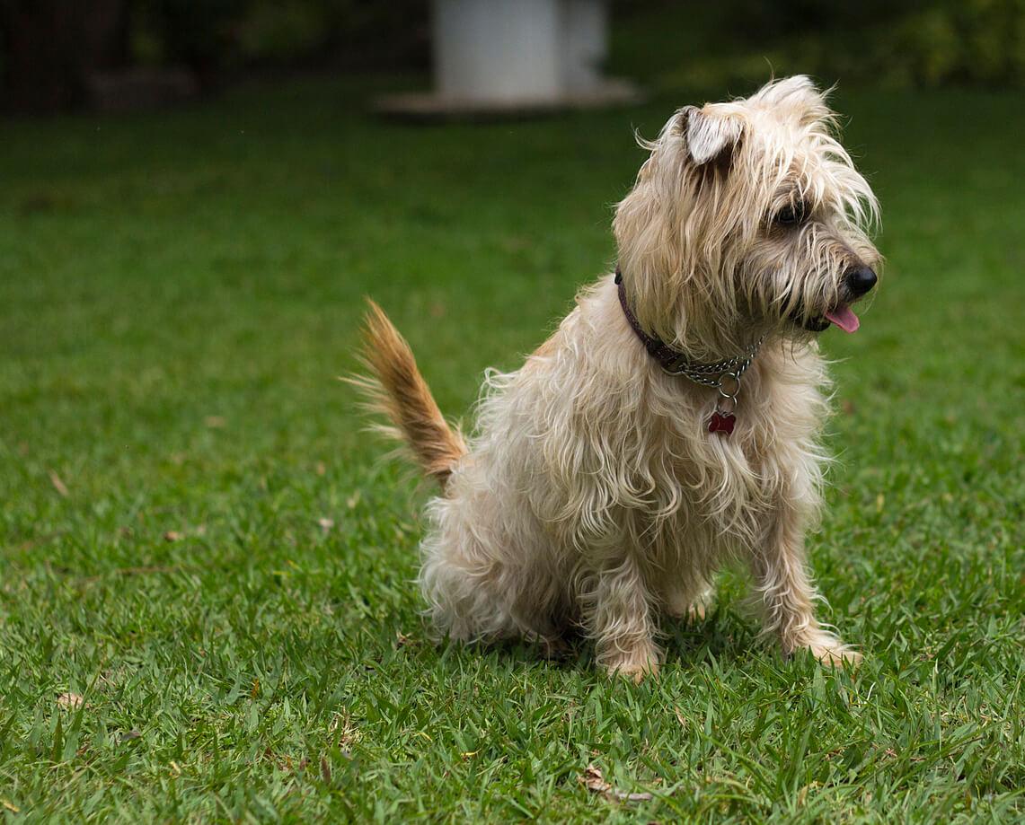 Dogilike.com :: จัดอันดับ 5 น้องหมาสายพันธุ์เล็กจอมทำลายบ้าน