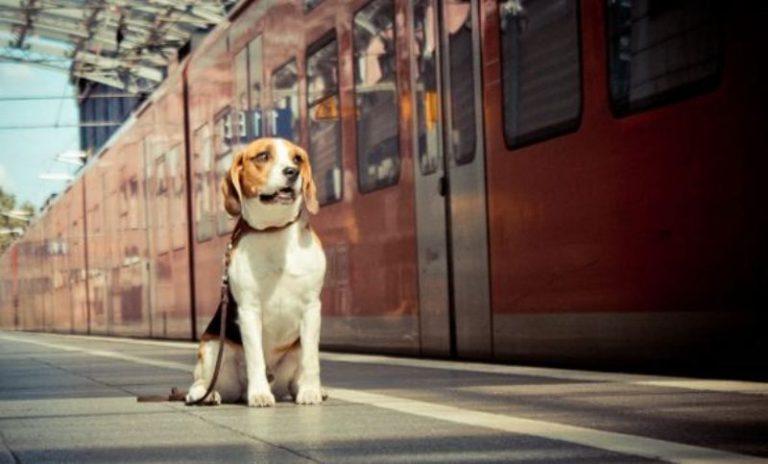 Dogilike.com :: อัปเดต! อยากพาน้องหมาขึ้นรถไฟต้องทำไงบ้าง