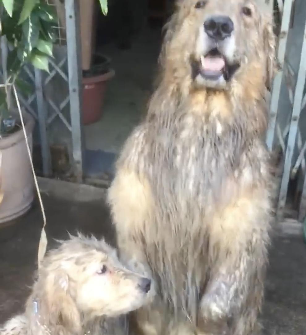 Dogilike.com :: เลอะแค่ไหนก็ตีไม่ลง! เมื่อเจ้าของโพสต์คลิปน้องหมาสำนึกผิดสุดน่ารักจนชนะใจชาวเน็ต