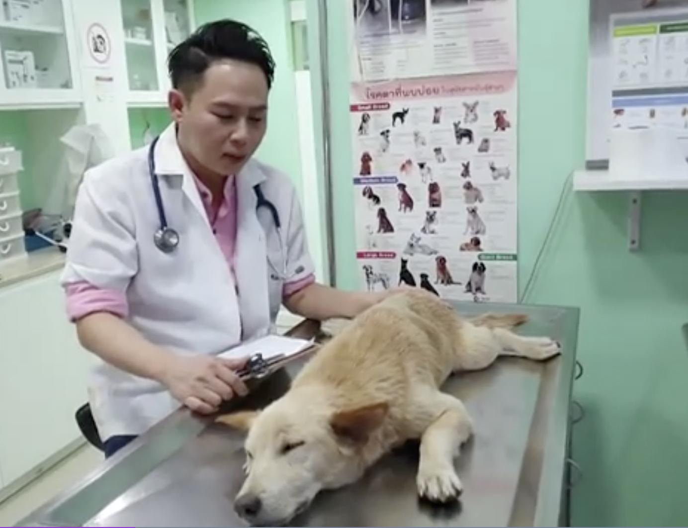 Dogilike.com :: พบสุนัขถูกยิงด้วยฉมวกยิงปลา ทาง รพ.สัตว์เผยเจอแบบนี้มาแล้ว 7 ตัว