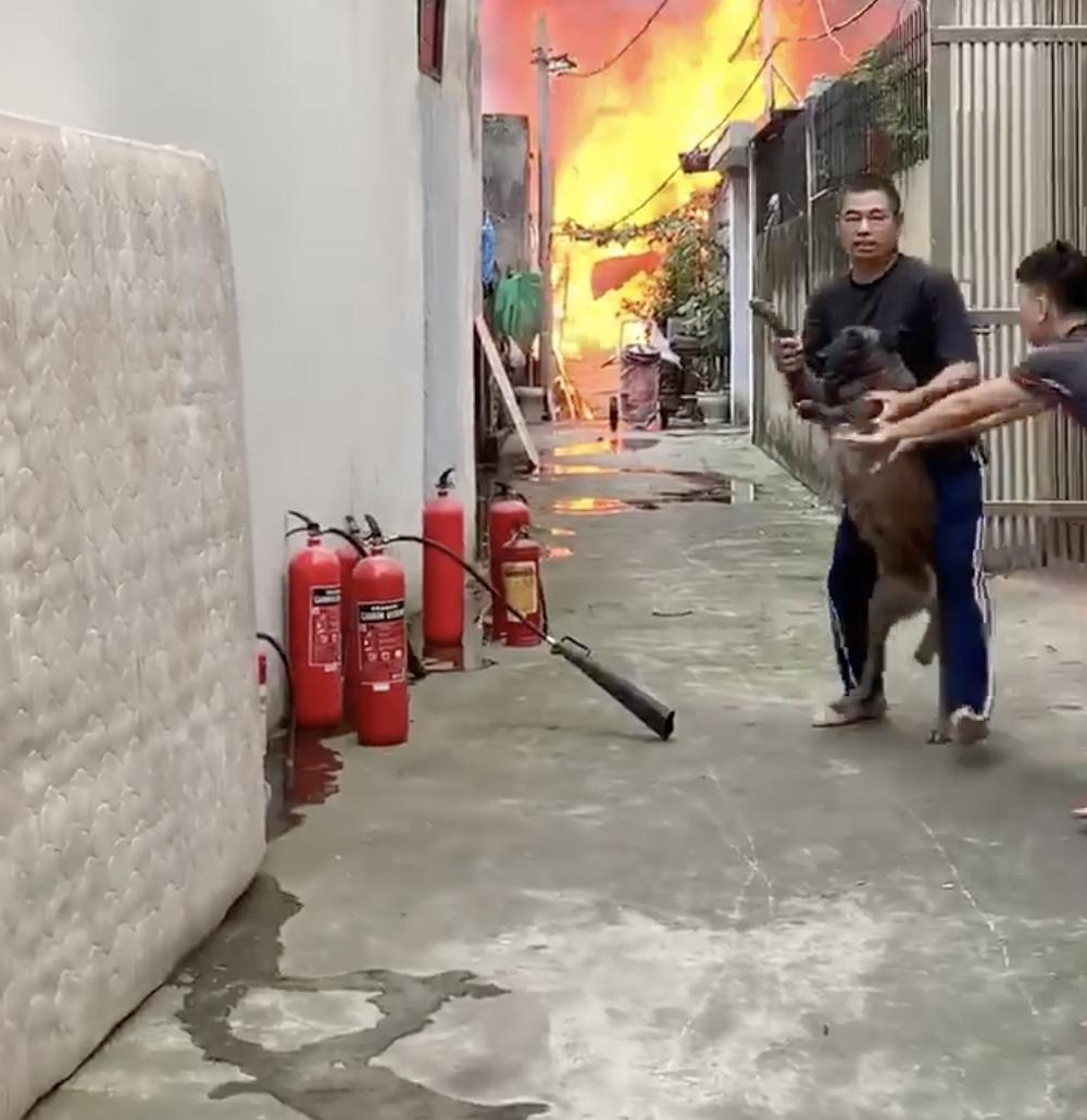 Dogilike.com :: ห่วงบ้านไหม้จนต้องรีบอุ้มออก เมื่อน้องหมากลัวว่าบ้านตัวเองจะไฟไหม้