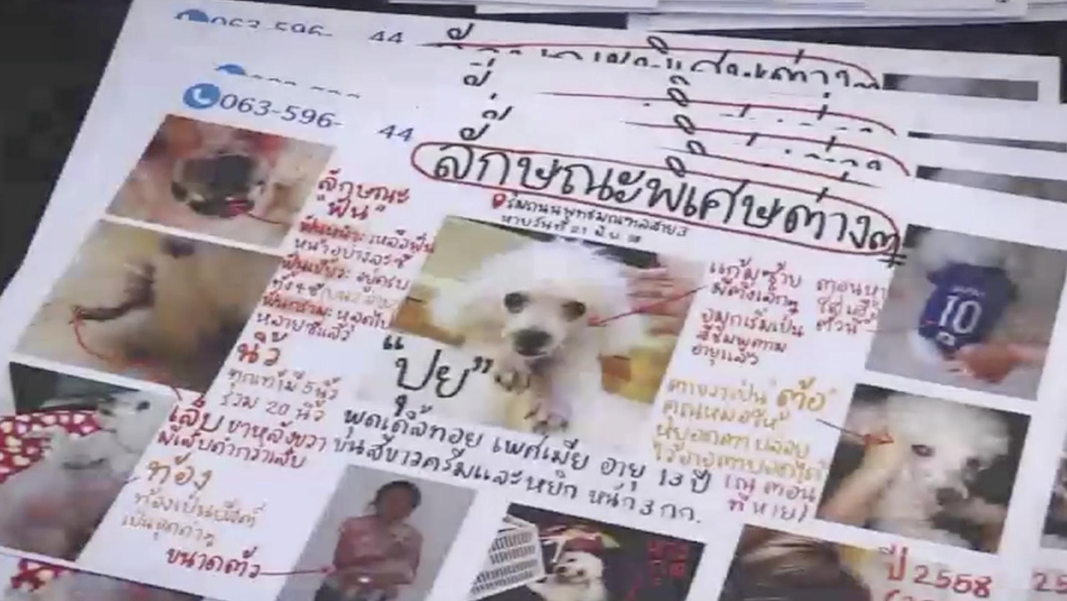 Dogilike.com :: ไม่เคยย่อท้อ กับ 5 ปีที่น้องนิ้งตามหาสุนัขของเธอ