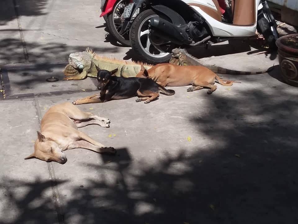 Dogilike.com :: ตกใจจนต้องหันไปมอง เมื่อสัตว์โลกสุดแปลกแวะมาทักทาย