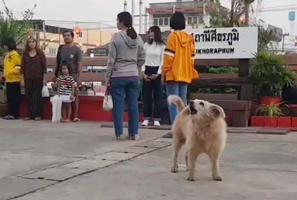 Dogilike.com :: �เจ้ากี้� น้องหมาประจำสถานีรถไฟที่ชื่นชอบการร้องเพลงชาติทุกเช้า-เย็น