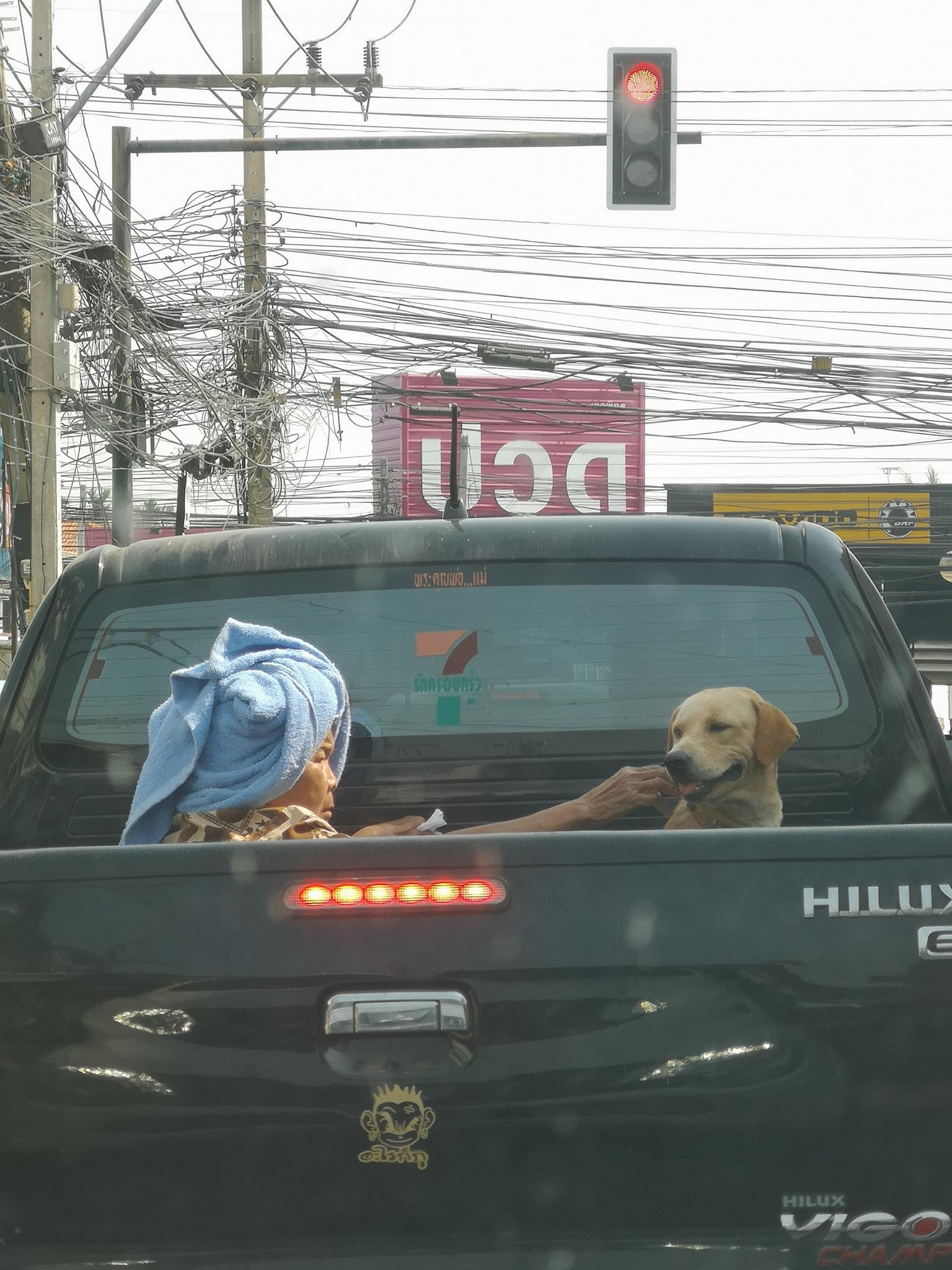 Dogilike.com :: สุดเอ็นดู เมื่อคุณยายนั่งหลังกระบะเป็นเพื่อนน้องหมาที่ป่วยอยู่
