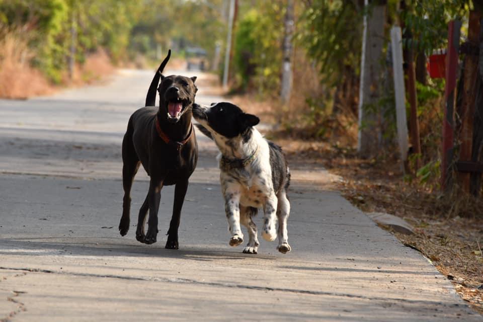Dogilike.com :: สาวโพสต์เรื่องสุดประทับใจ เลิกเหล้าได้เพราะช่วยชีวิตน้องหมา