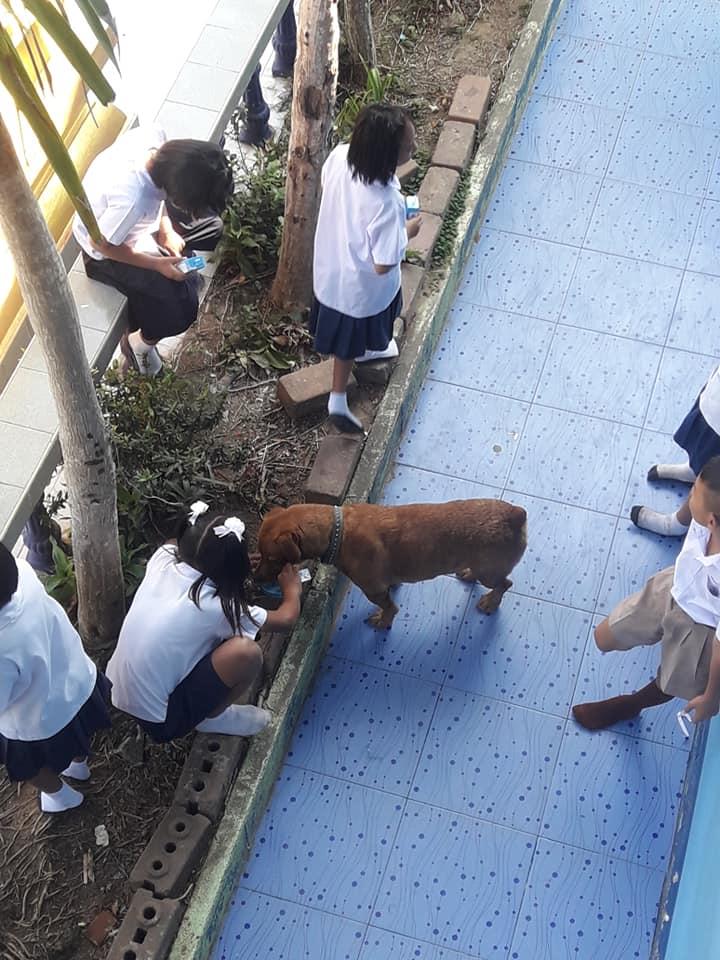 Dogilike.com :: โป๊ะแตก! เมื่ออาจารย์จับได้ว่านักเรียนแอบเอานมโรงเรียนที่แจกไปให้น้องหมา